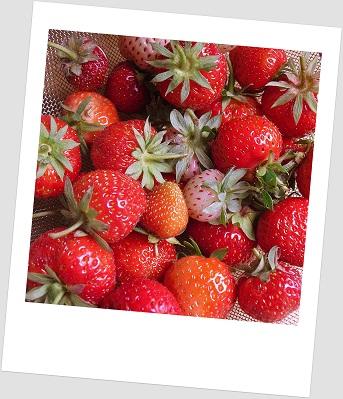 Voedwel, natuurlijk voedingsadvies, aardbeien