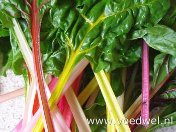 Voedwel, natuurlijk voedingsadvies, natuurvoedingskundige, snijbiet