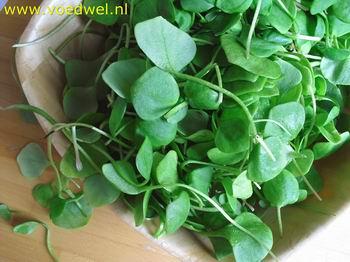 -Salade van winterpostelein
