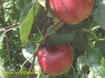 Appeldessert uit de oven